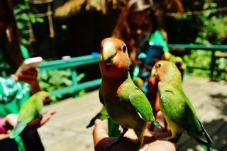 Animal Camp Jamaica photo 1