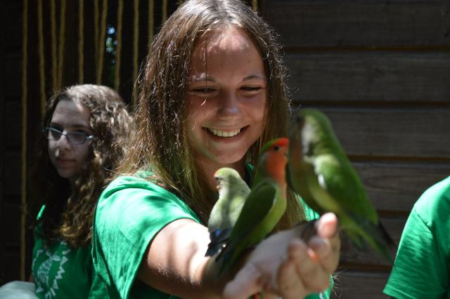 These Love Birds will land right on you at Dolphin Cove's animal walk!