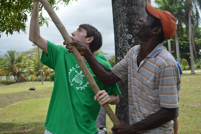 That's a camper plucking a Mango from a Mango tree along with our friend Peter, the Banana Man!