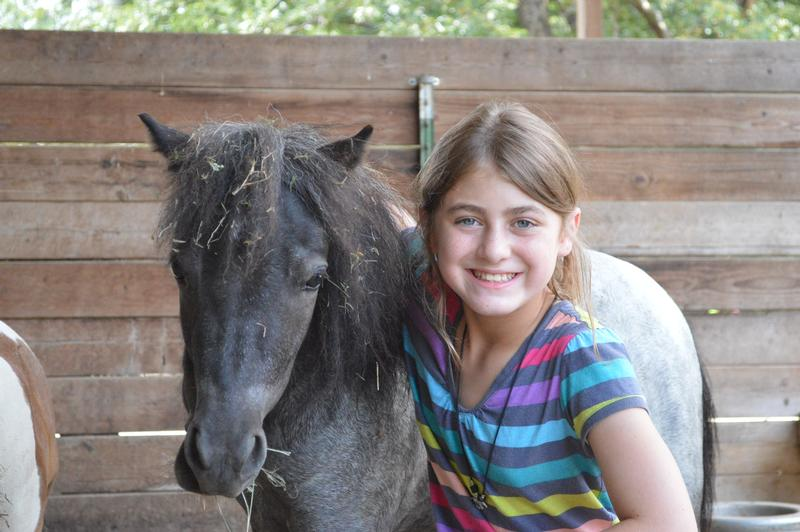 Adopt one of our miniature horses or donkeys during your stay in