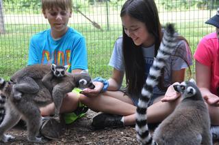 Cub Creek Animal Camp photo 1